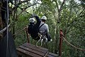 Canopy tree top tours, Tsitsikamma Forest, Garden Route (6252674869).jpg