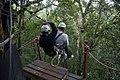 Canopy tree top tours, Tsitsikamma Forest, Garden Route (6252674869).jpg