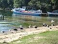 Canto da Lagoa da Conceição - By Mauro Soares - panoramio (1).jpg