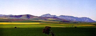 Overberg - Overberg in the early spring with canola fields in the foreground and Riviersonderend Mountains in the background