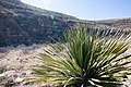 Carlsbad Caverns National Park and White's City, New Mexico, USA - 48344867116.jpg