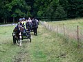 Carriage Driving at Kingston Lacy - geograph.org.uk - 884547.jpg
