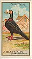 Carrier Pigeon, from the Birds of America series (N4) for Allen & Ginter Cigarettes Brands MET DP828748.jpg