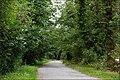 Castlewellan forest park (2) - geograph.org.uk - 550513.jpg