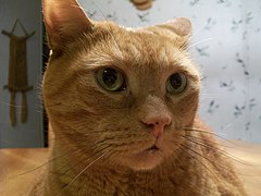 Cat Close Up.jpg