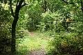 Chagford, woodland path - geograph.org.uk - 2090855.jpg