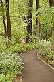 Chanticleer Gardens Asian Woods 2000px.jpg
