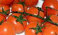 Cherry Tomatoes on a plate 04.JPG