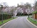 Chiltern Hills Road, Beaconsfield - geograph.org.uk - 150498.jpg