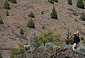 Chimney Rock Trail (14494431131).jpg