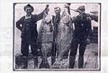 Chinook salmon, Astoria Oregon circa 1910.jpg