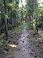 Choto Gourichanna, Phuljhury, Barguna - panoramio (4).jpg
