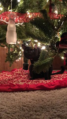 other resolutions 135 240 pixels - Black Cat Christmas Tree