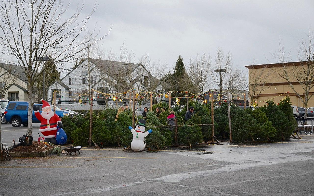 Free Christmas Trees