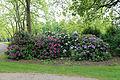 City of London Cemetery - flowering shrubs 05.jpg