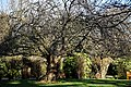 City of London Cemetery Memorial Gardens lawn tree and hedge 01.jpg