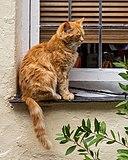 Clovelly (Devon, UK), Katze -- 2013 -- 1337.jpg