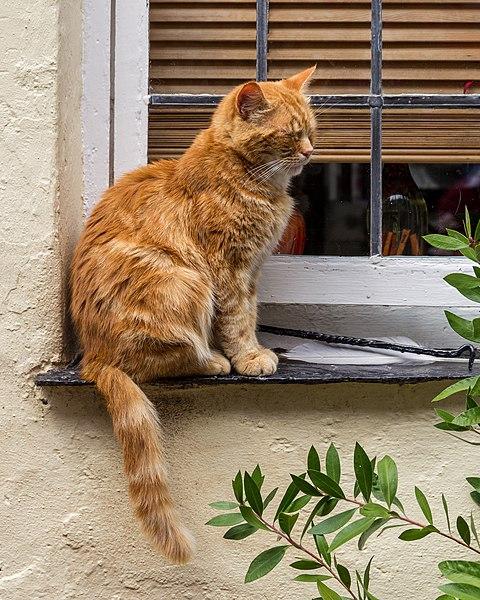 File:Clovelly (Devon, UK), Katze -- 2013 -- 1337.jpg