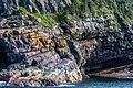 Coastline St John Newfoundland (40651105794).jpg