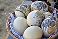 Coloured Botswana Ostrich egg shell.jpg