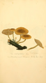 Coloured Figures of English Fungi or Mushrooms - t. 167.png