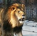 Columbus zoo (2303510144).jpg