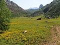 Comeya Meadow - 2013.07 - panoramio.jpg