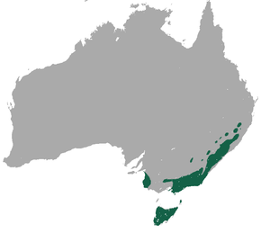 alt=Description de l'image Common Wombat area.png.