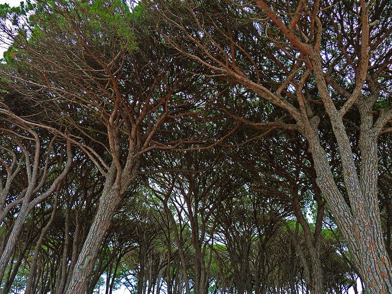 File:Cook Park, Sans Souci, New South Wales (2010-11-28) 05.jpg
