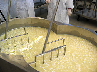 Manufacture of cheddar cheese - Cooking of curds, during the manufacture of cheddar cheese