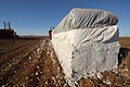 Cotton harvest on the South Plains near Lubbock, Texas. A module of cotton ready to be transported to the cotton gin. (24486644394).jpg