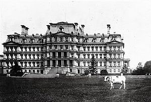 Holstein Friesian cattle - President William Howard Taft's cow, Pauline, in front of the Navy Building, which is known today as the Eisenhower Executive Office Building