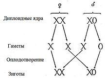 Мужские хромосомы и женские в сперме