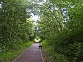 Cycle path through the trees - geograph.org.uk - 916363.jpg