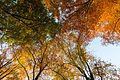 Dülmen, Börnste, Blätterdach über einem Waldweg -- 2015 -- 9901.jpg