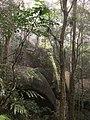 Danbulla National Park.jpg