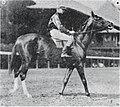 Dandelion (horse).jpg