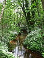 Darwell Stream - geograph.org.uk - 1285657.jpg