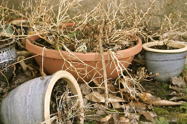 Pri nedostatku vody rastliny vädnú a neskôr aj hynú