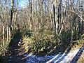 Deadman Wood - geograph.org.uk - 1118037.jpg