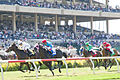 Del Mar races - Aug 2011.jpg