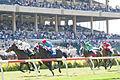 Del Mar races - Aug 2011.jpg