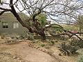 Desert Botanical Garden Phoenix Arizona 17.JPG
