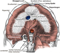 funcion y ordenamiento del diafragma