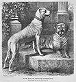 Die Gartenlaube (1875) b 825.jpg