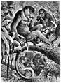 Die Gartenlaube (1883) b 241.jpg