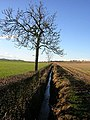 Ditch And Tree Near Broadyards Farm - geograph.org.uk - 291185.jpg