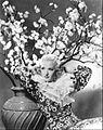 Dixie Lee 1935.jpg