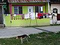 Dog Finds Relief - San Miguel - Peten - Guatemala (15862945825).jpg