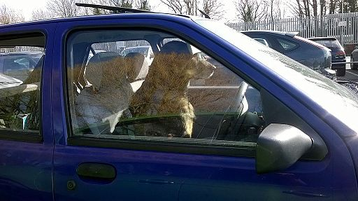 Dog drives car (13889342521) signs of heat stroke